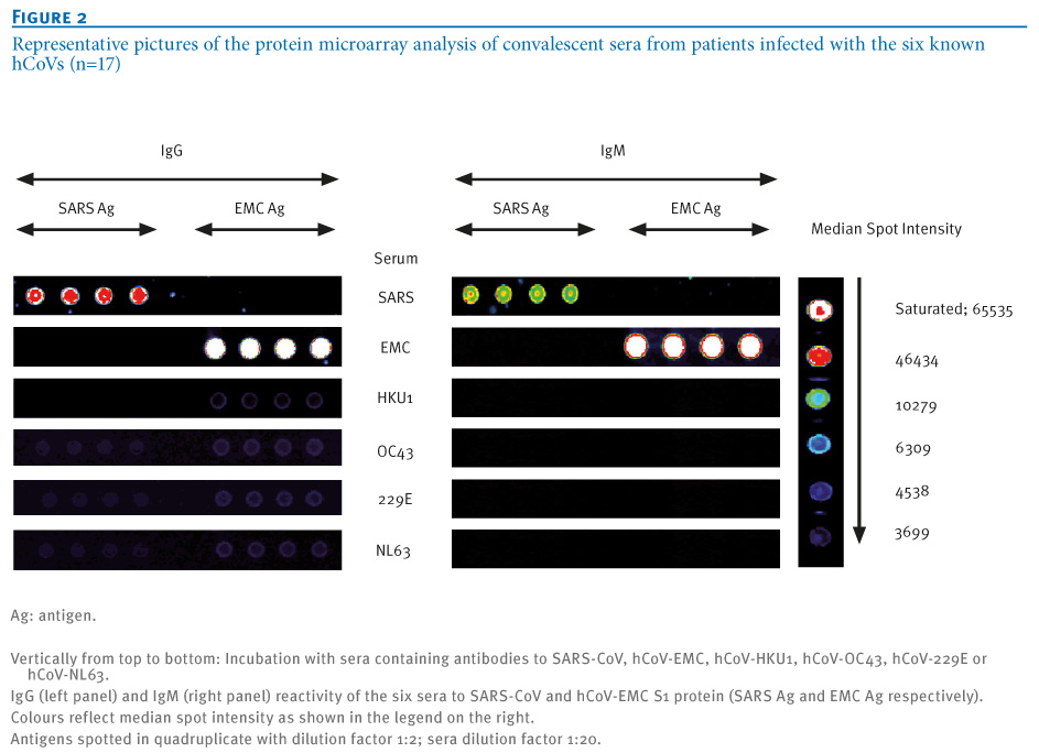Protein Microarray Influenza of The Protein Microarray